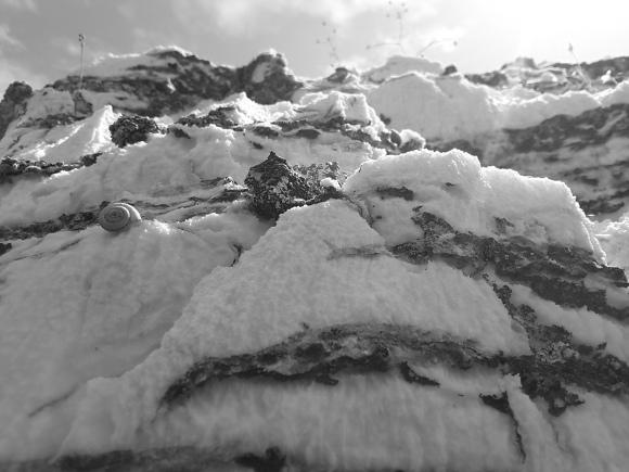 lumaca arrampicata su una roccia bianca, probabilmente gesso