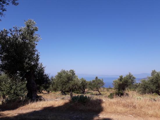 Ulivi Peloponneso