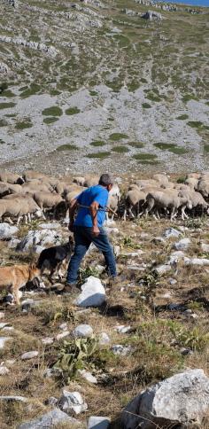 Il pastore Americo, foto di Emiliano Cribari