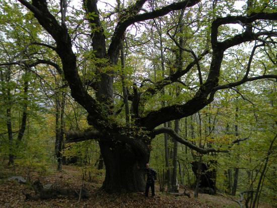 La colonia di grandi bocche del bosco di Grou. Foto: Tiziano Fratus