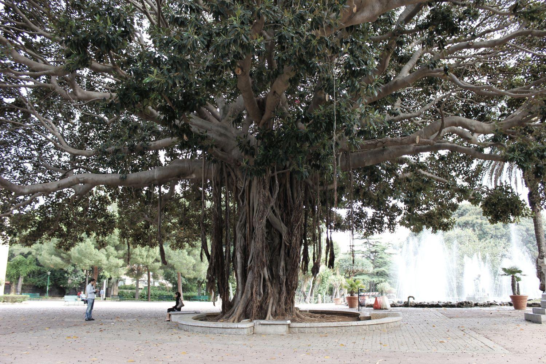 La sagrada familia degli alberi in ascolto del signore delle lingue e delle radici blog - Grandi alberi da giardino ...