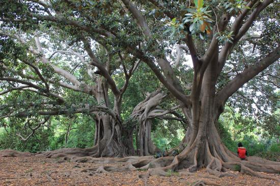 La sagrada Familia degli alberi. In ascolto del Signore delle lingue e delle radici. Foto: Tiziano Fratus