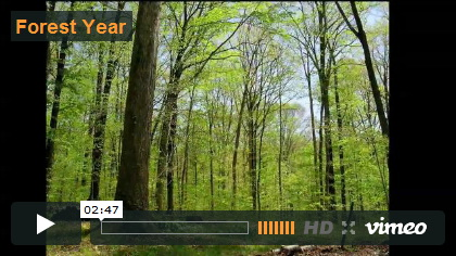 Video Forest Year