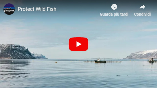 Video Patagonia: Protect Wild Fish
