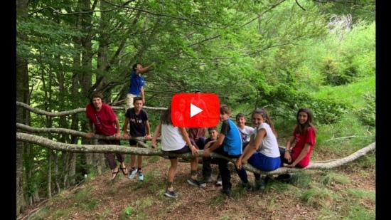Video Selvatici all'Orsigna