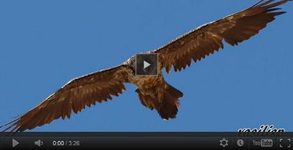 video Gipeto Creta