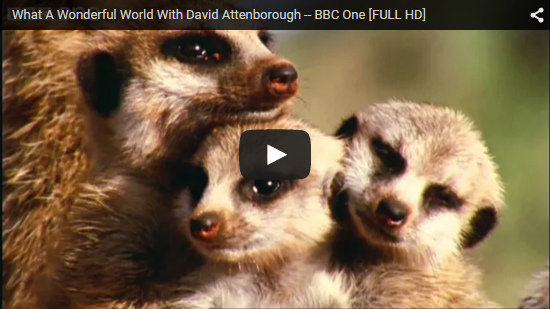 Video What A Wonderful World With David Attenborough - BBC One